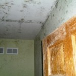 Mold in residence