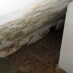 Mold in bedroom of residence
