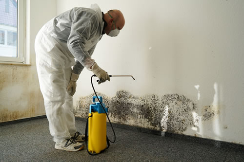 About Mold Remediation