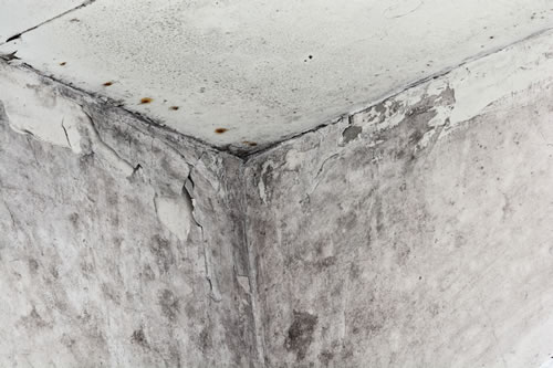 Is there mold in my house? Mold remediation. Chicagoland Mold Doctors.